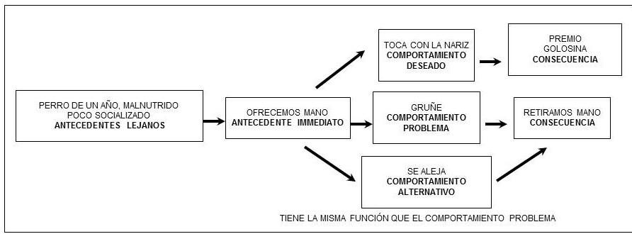 Diagrama de evaluación funcional