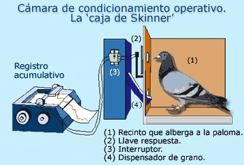 Cámara operante com paloma