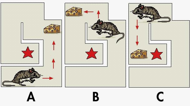 Rata en laberinto operante