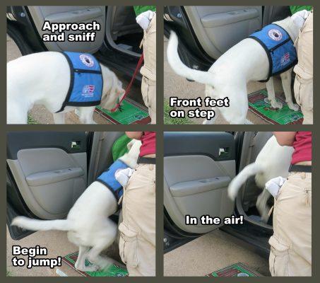 Logan saltando dentro del coche