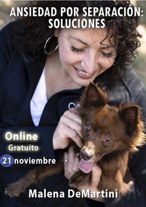 WEBINARIO SOLUCIONES A LA ANSIUEDAD POR SEPARACIÓN. MALENA DEMARTINI